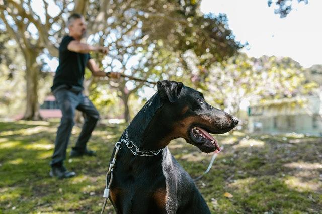collier gps sur chien de chasse